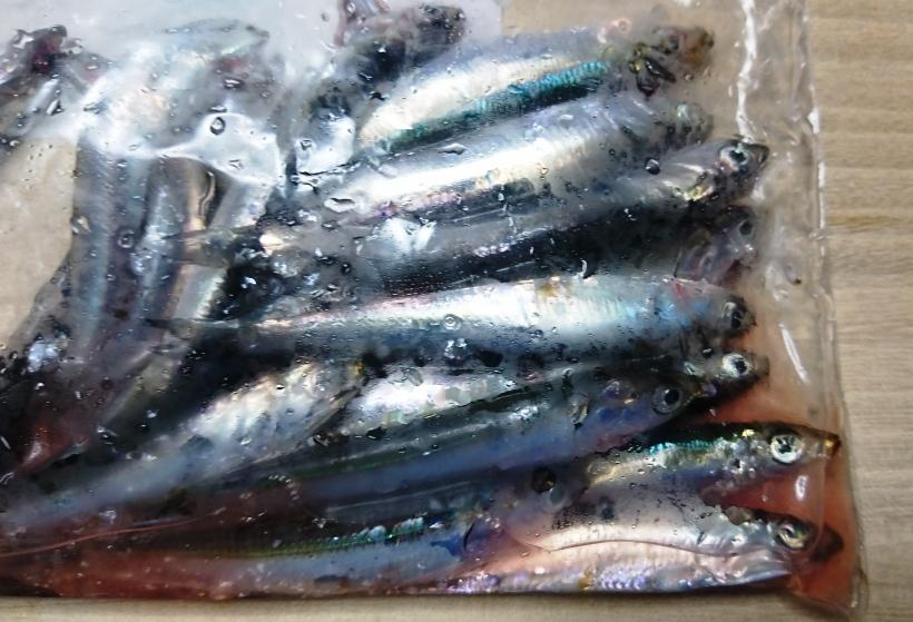 横浜の本牧海釣り施設でアジを釣るなら ...
