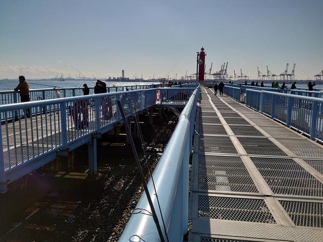 大黒 海 釣り 施設 釣果