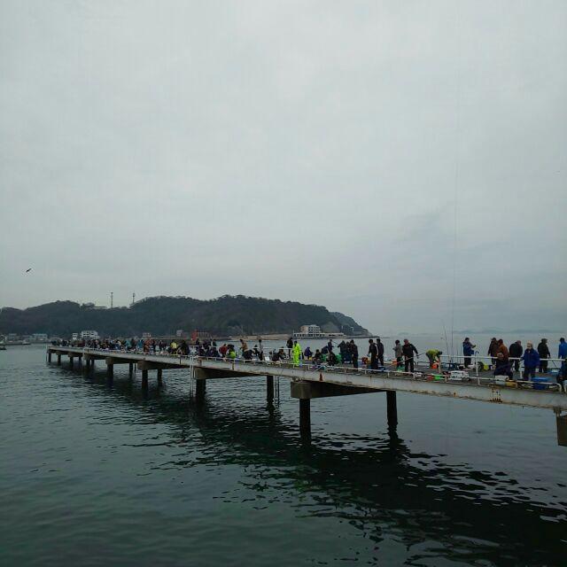 イワシ 桟橋 豊浜 釣り