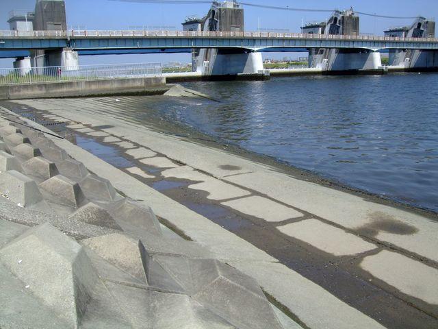 ハゼ 江戸川